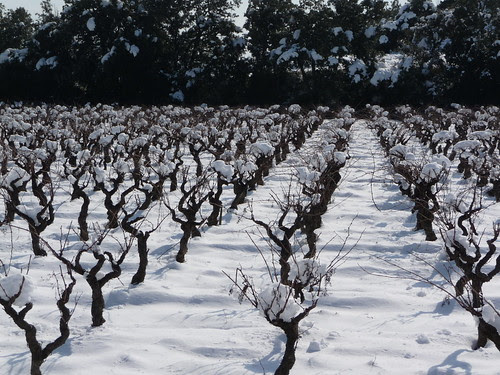 snow on the vines