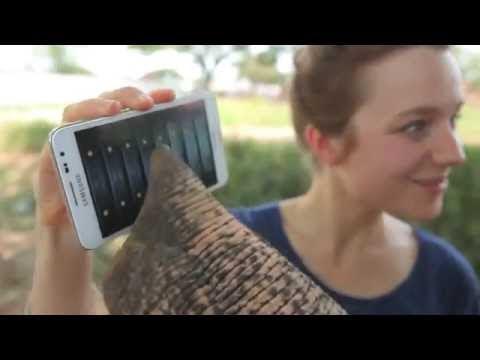 Video que muestra a un elefante jugando con un teléfono móvil