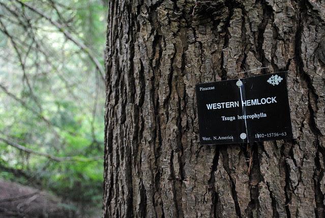 Tree ID nameplates - Hoyt Arboretum - Portland, Oregon