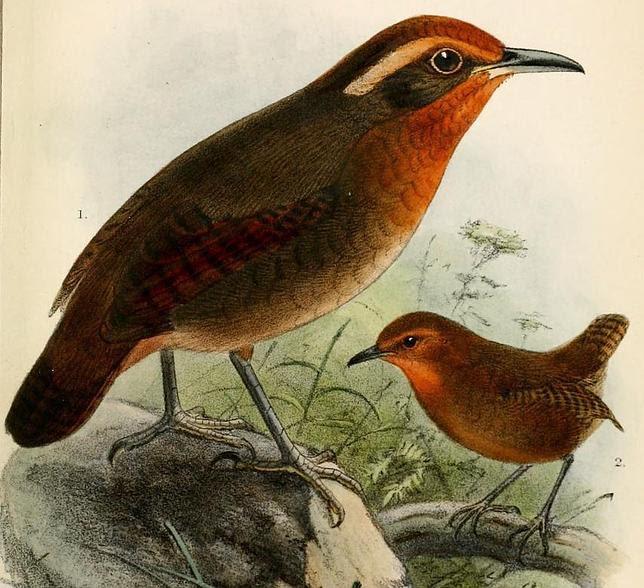 El pájaro que inventó la música de Bach