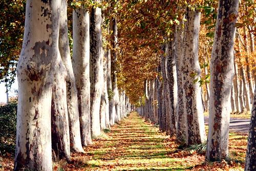 noviembre en la vega de aranjuez