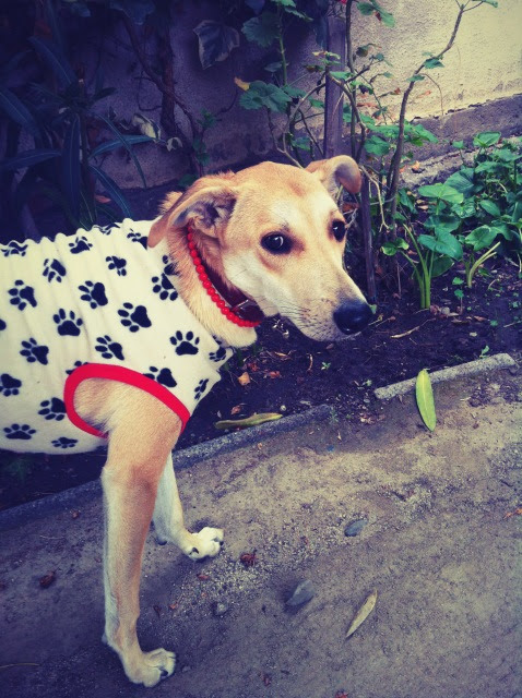 Mea La Calle El Tumblr De Perritos Que Se Burla De Los Fashionistas