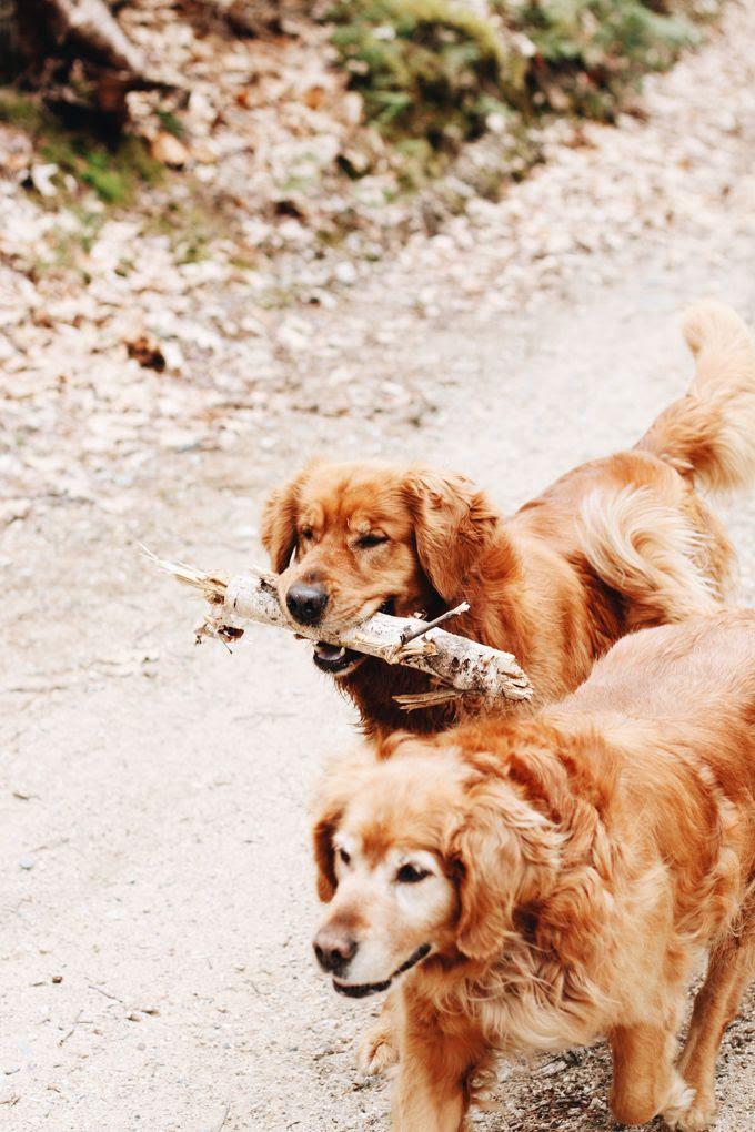 photo Orchid Grey Julie OBoyle Maine03_zpsbwklun93.jpg