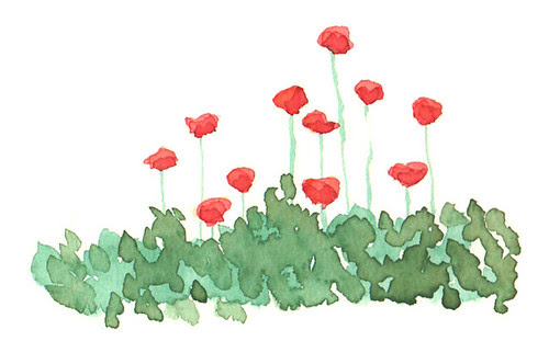 april poppies