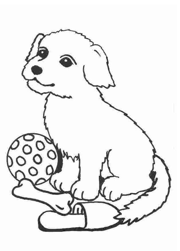 Wie gut kennst du Hunde?