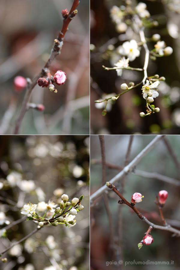 Primavera2013