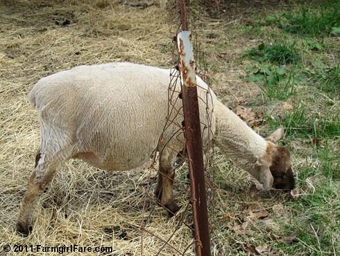 Eugenie through the fence