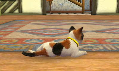 Nintendogs Cats Toy Poodle New Friends Ds Walkthrough And Guide Page 2 Gamespy