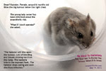 Be kind to dwarf hamsters. Don't wait till tumour becomes large to ask your vet to excise it. Toa Payoh Vets