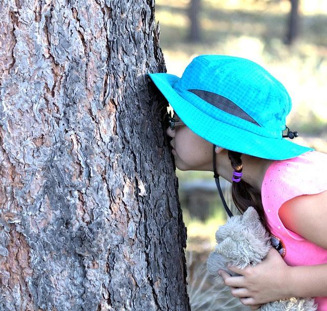 Mature Ponderosas bark has the distinct smell of vanilla. Graci sniffing Ponderosa bark 20130618
