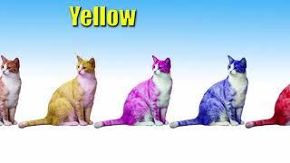 All Clip Of Mewarnai Kucing Untuk Anak Bhclipcom