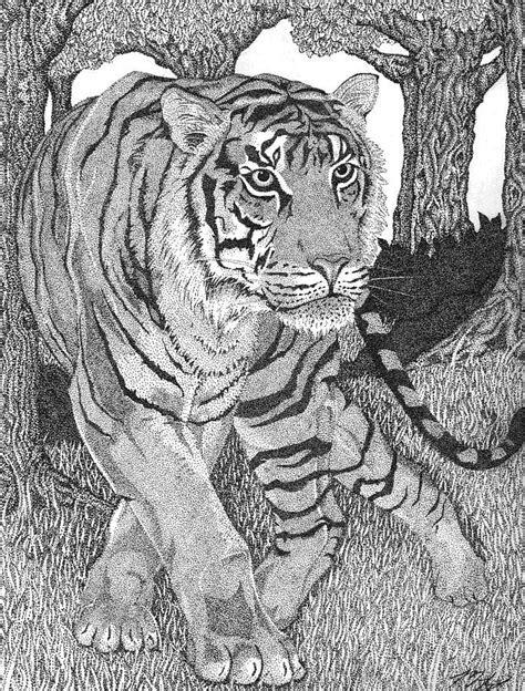 jungle prince stipple  mike harrison tyger