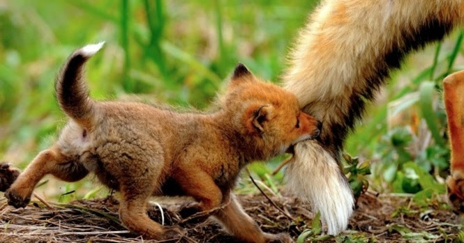 Animais que sabem que podem contar com o amor de suas mães