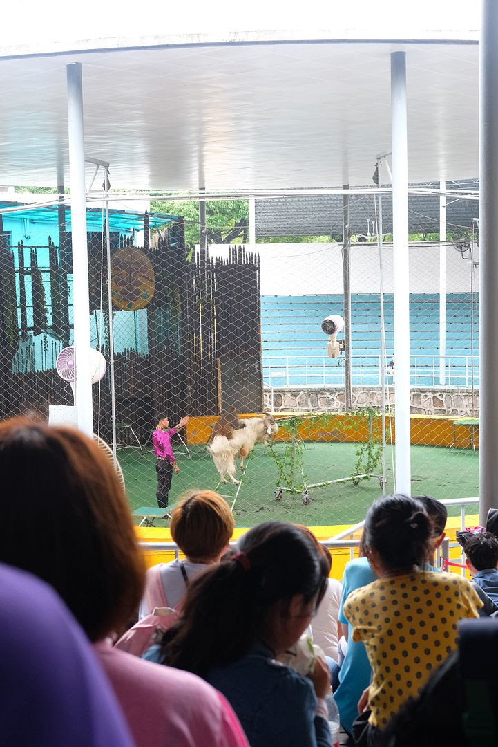 photo shanghai wildlife animal park animal show.jpg