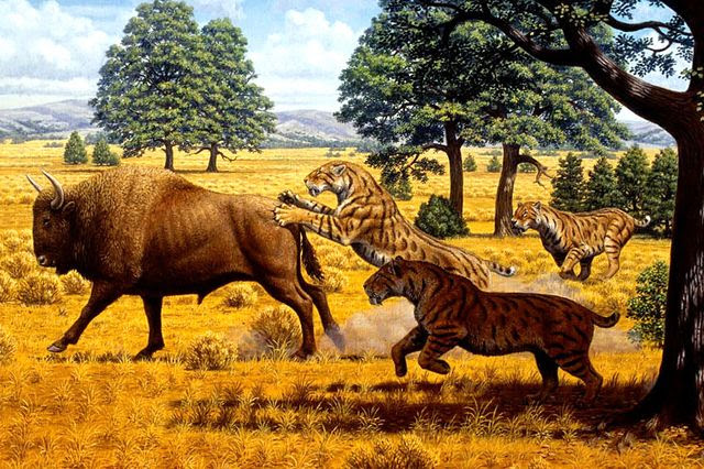 Saber-toothed cats and bison illustration