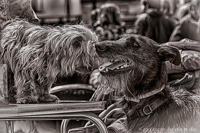 ¿Te acuerdas cuándo nos conocimos? éramos los perroflautas más felices de la plaza.