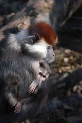 Zoo Animals (6)
