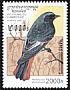 Black Redstart Phoenicurus ochruros
