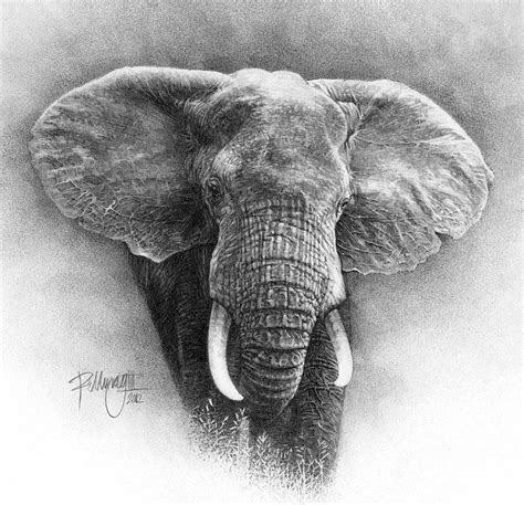 african black rhino drawing  ralph  murray iii