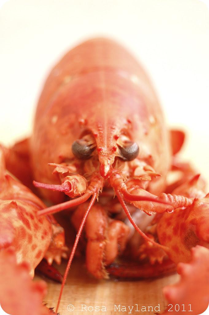 Lobster 2.1 bis