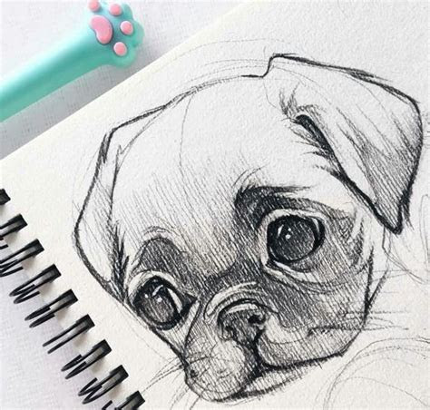 easy animal sketch drawing information ideas