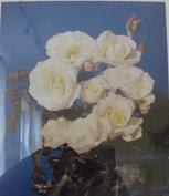 Rose Kristall Foto Brandt im Rosenmuseum Bad Langensalza