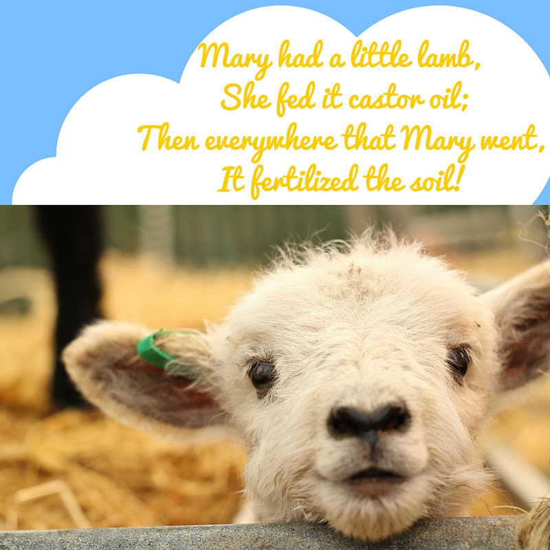 Mary Had a Little Lamb - she fed it castor oil...