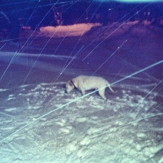 Snowing like crazy! #dogstagram #snow #newengland