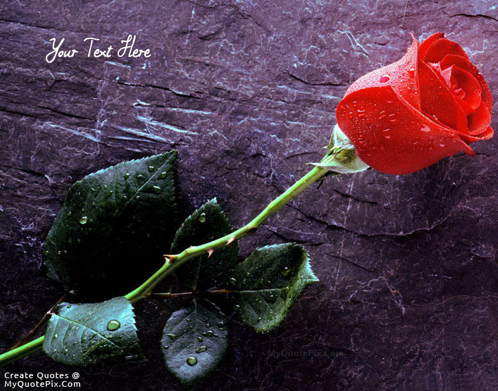 Write Quote On Beautiful Rose Picture