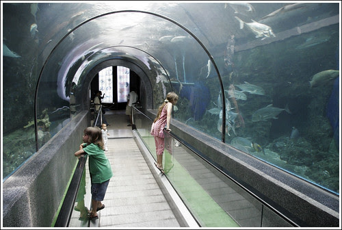 Kids in the tunnel at Phuket Aquarium