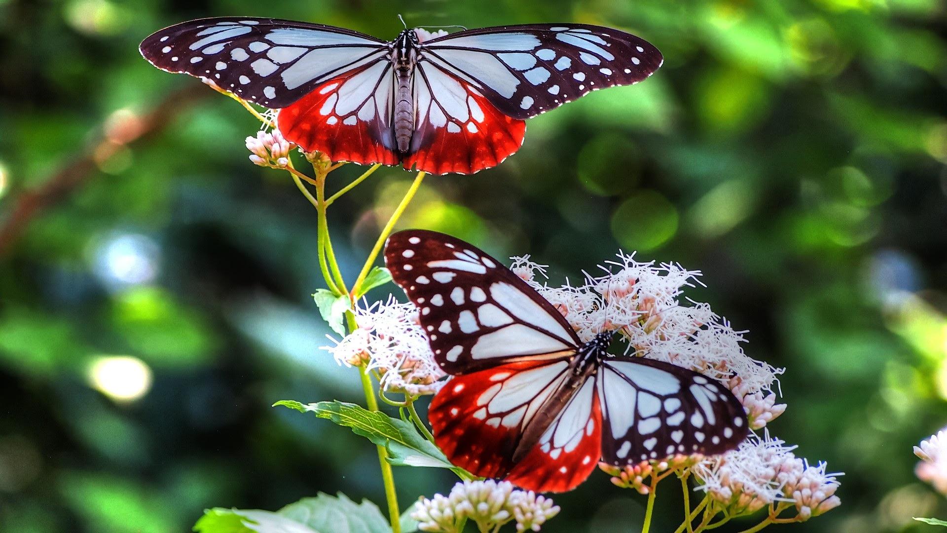 Beautiful Butterflies and Flowers Wallpapers - WallpaperSafari