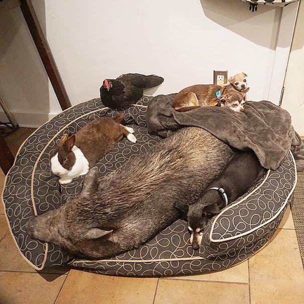 9. Многим животным требуется индивидуальное питание предписанное ветеринаром.