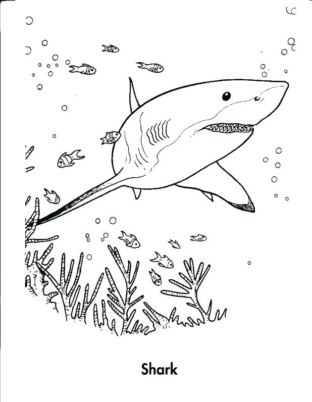 Scary Shark Coloring Pages at GetColorings.com   Free ...