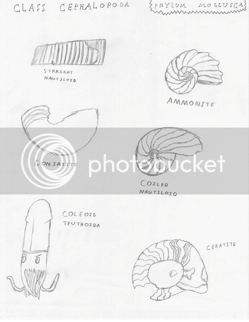 Mollusca 3