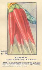 legume74 radis