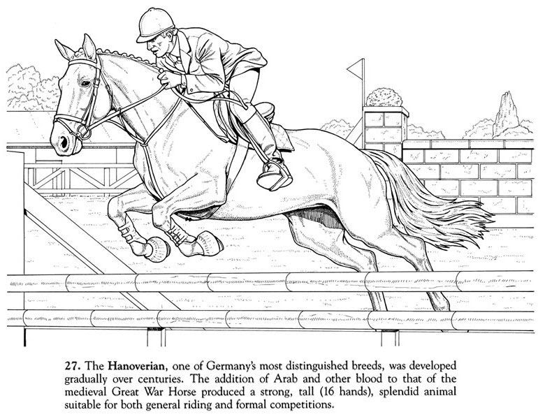 kostenlose malvorlagen pferde bilder zum ausmalen springen