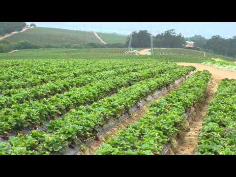 Study Finds Commercial Organic Farms Have Better Fruit And Soi