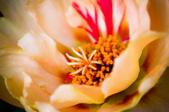 IMG_3125fall flowers