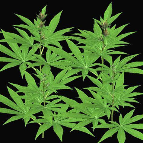 Animated Marijuana Wallpaper   WallpaperSafari