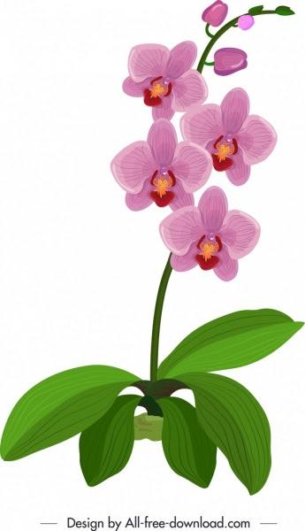Sketsa Warna Bunga Anggrek
