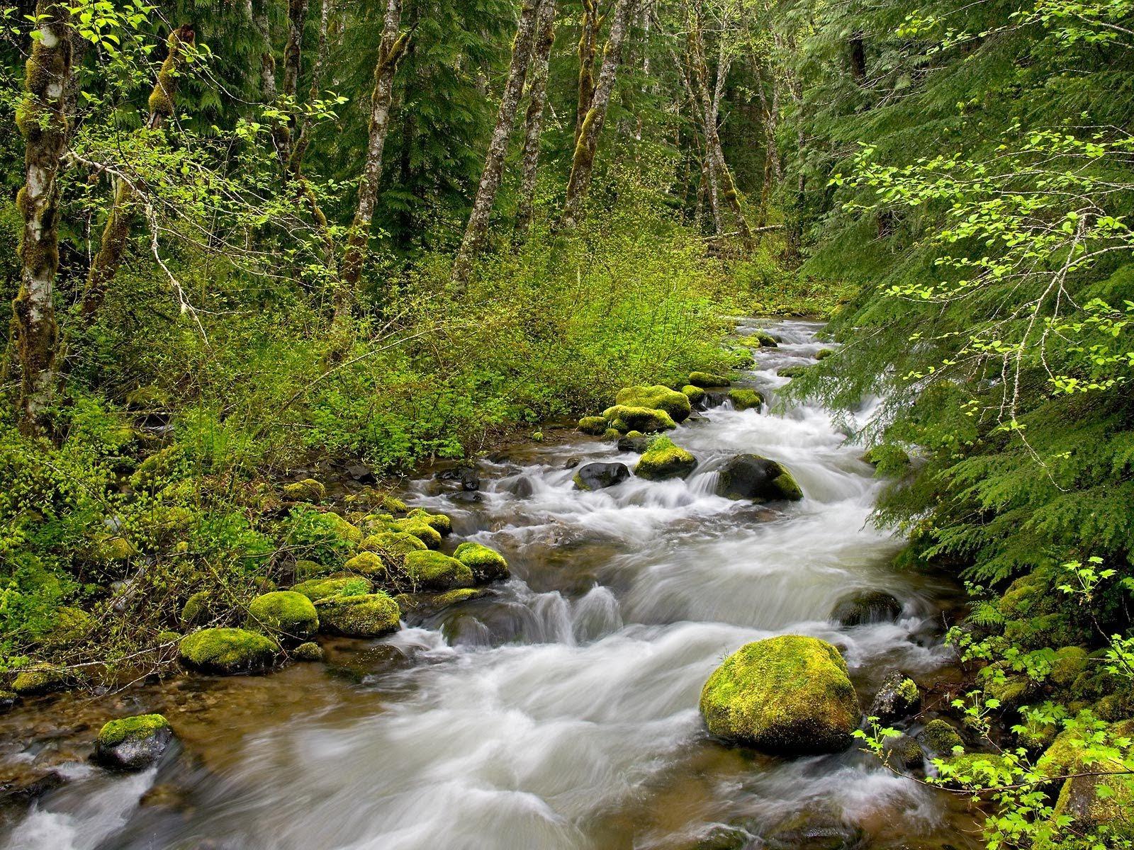 Hd Wallpaper Forest River