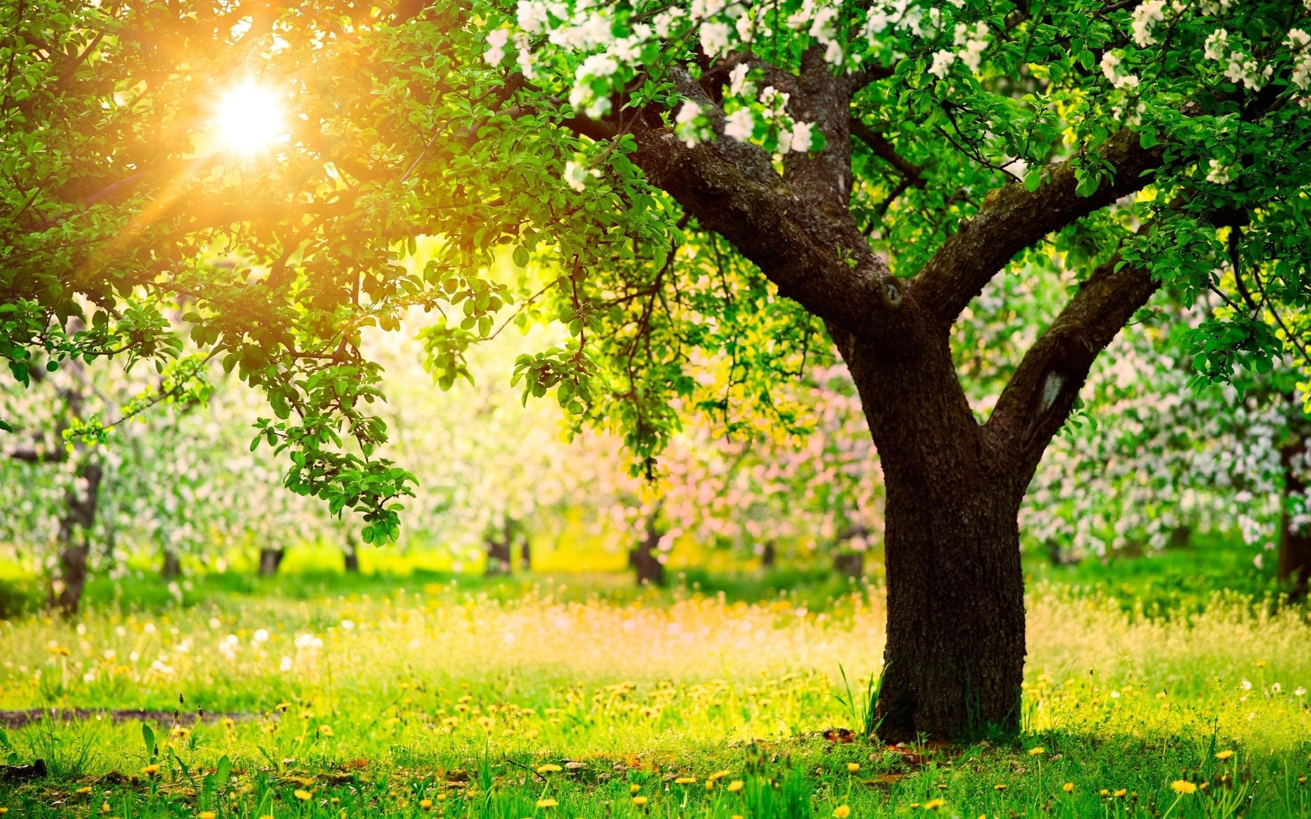 Αποτέλεσμα εικόνας για trees .spring,birds