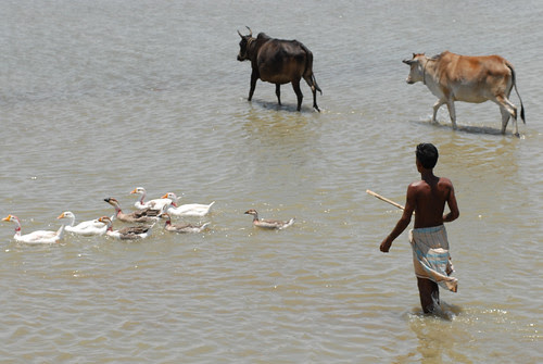 A Fisherman And His Livestock Bangladesh Photo By Worldf