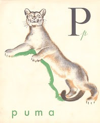 abc castor p16