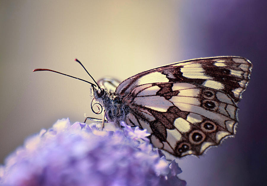 Image result for butterfly photograph