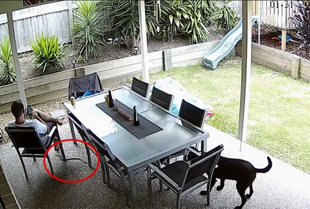 Drew Scott foi alertado por cão sobre cobra venenosa (Foto: Reprodução/YouTube/Drew S)
