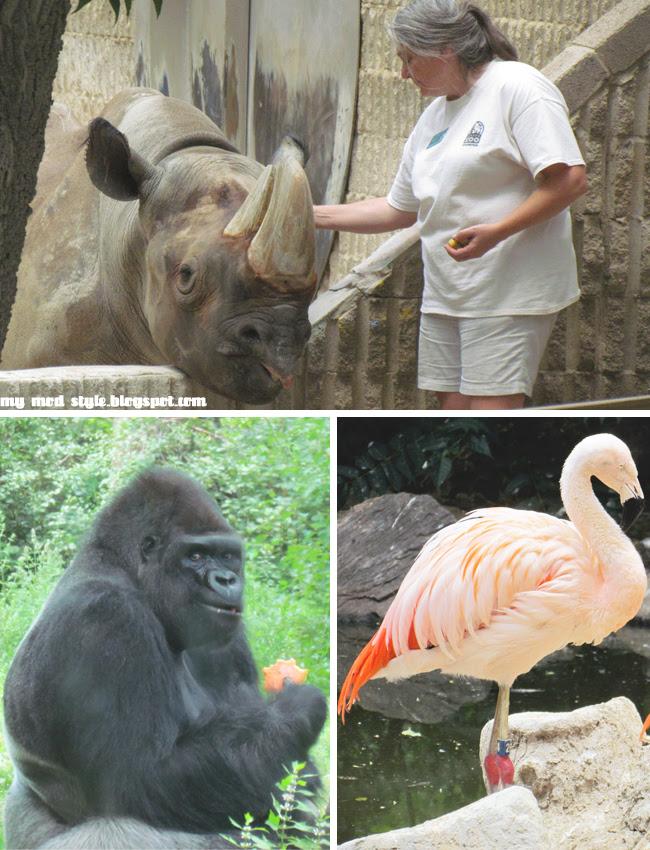 Denver Zoo Collage5