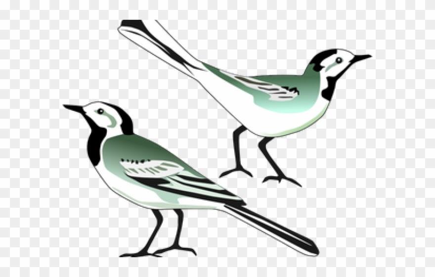 Gambar Burung Merpati Kartun Hitam Putih - Gambar Burung