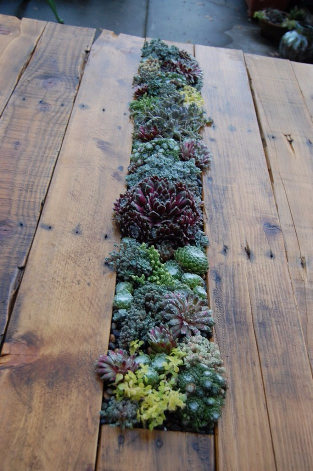 DIY Pallet Furniture Ideas - DIY Pallet Succulent Table - Best Do It Yourself Projects Made With Wooden Pallets - Indoor and Outdoor, Bedroom, Living Room, Patio. Coffee Table, Couch, Dining Tables, Shelves, Racks and Benches http://diyjoy.com/diy-pallet-furniture-projects