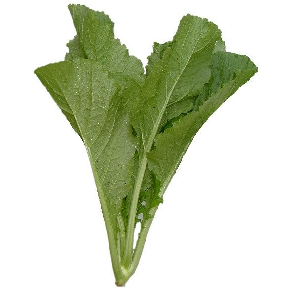 The Many Benefits of Mustard Leaves